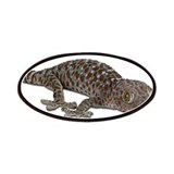 Tokay Gecko Patches
