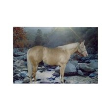 Cute Palomino Rectangle Magnet