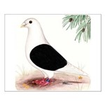 Saddle Homing Pigeon Small Poster