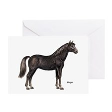 Morgan Horse Greeting Card
