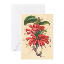 Antique Red Flower Greeting Cards (Pk of 10)