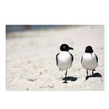 Cute White bird Postcards (Package of 8)