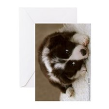 Border Collie Puppy Greeting Card Pack=6