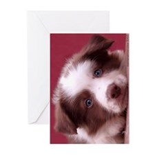 Border Collie - Red Puppy Cards (Pack=6)