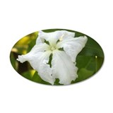 White Squash Flower 22x14 Oval Wall Peel