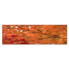 Autumn tint Bumper Bumper Sticker