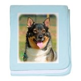Swedish Vallhund 9K003D-10 baby blanket
