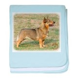 Swedish Vallhund 9R015D-320 baby blanket