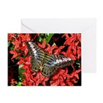 Butterfly on Red Flowers Greeting Card