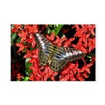 Butterfly on Red Flowers Mini Poster Print