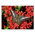 Butterfly on Red Flowers Small Poster