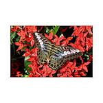 Butterfly on Red Flowers 38.5 x 24.5 Wall Peel