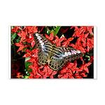 Butterfly on Red Flowers 22x14 Wall Peel