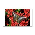 Butterfly on Red Flowers Car Magnet 20 x 12