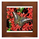 Butterfly on Red Flowers Framed Tile