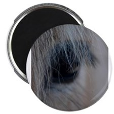 "Unique Fjord horse 2.25"" Magnet (10 pack)"