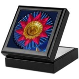 Horse Show Blue Ribbon Awards Keepsake Box