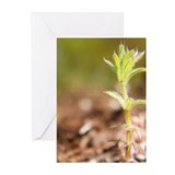Growth Greeting Cards (Pk of 10)