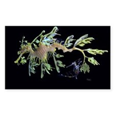 Leafy Seadragon with Weedy Se Decal