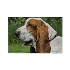 Bentley The Basset Hound Rectangle Magnet
