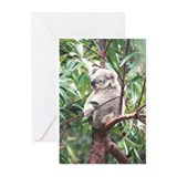 Koala Greeting Cards 3 (Pk of 10)