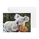 Koala Greeting Cards 4 (Pk of 10)