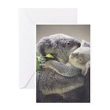 Koala Greeting Cards 7 (Pk of 10)