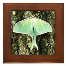American Moon Moth Framed Tile
