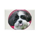 Funny Shih Tzu Rectangle Magnet (100 pack)