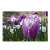 Purple Tulip Postcards (Package of 8)