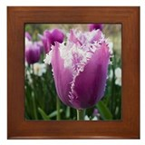 Purple Tulip Framed Tile