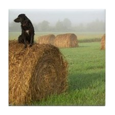 Dog on a Hay Bale Tile Coaster