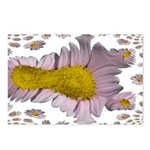 Funky Daisy Postcards (Package of 8)