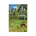 Horse in a Tropical Pasture Rectangle Magnet (100