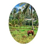 Horse in a Tropical Pasture Ornament (Oval)