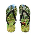 Horse in a Tropical Pasture Flip Flops