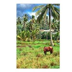 Horse in a Tropical Pasture Postcards (Package of