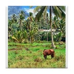 Horse in a Tropical Pasture Tile Coaster