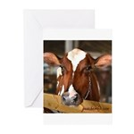 Cow 1 Greeting Cards (Pk of 10)