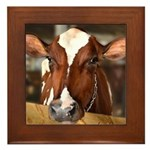 Cow 1 Framed Tile
