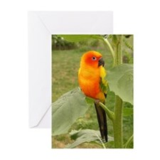 Funny Tropical sunset Greeting Cards (Pk of 10)