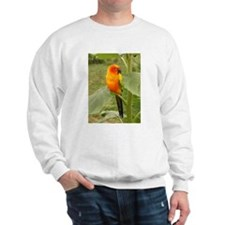 Cute Sun perch Sweatshirt