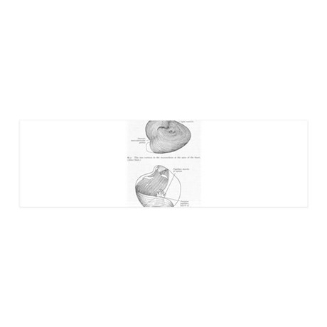 Grays Anatomy heart 42x14 Wall Peel
