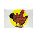 Production Red Sunburst Rectangle Magnet (100 pack