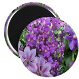 Purple and Pink Clematis Magnet