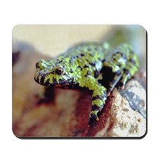 Green Frog 1 Mousepad