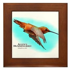 Allen's Hummingbird Framed Tile