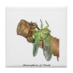 Metamorphosis of Cicadas Tile Coaster