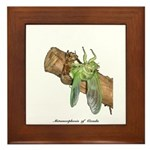 Metamorphosis of Cicadas Framed Tile
