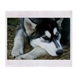 Siberian husky Throw Blankets